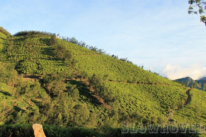 The dreamy, so-clean-it-could-hurt-your-eyes-if-you-stare-for-too-long jade inhabitants of the plantation