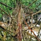 Exploring the Living Root Bridges of Meghalaya: Part 1- Cherrapunjee